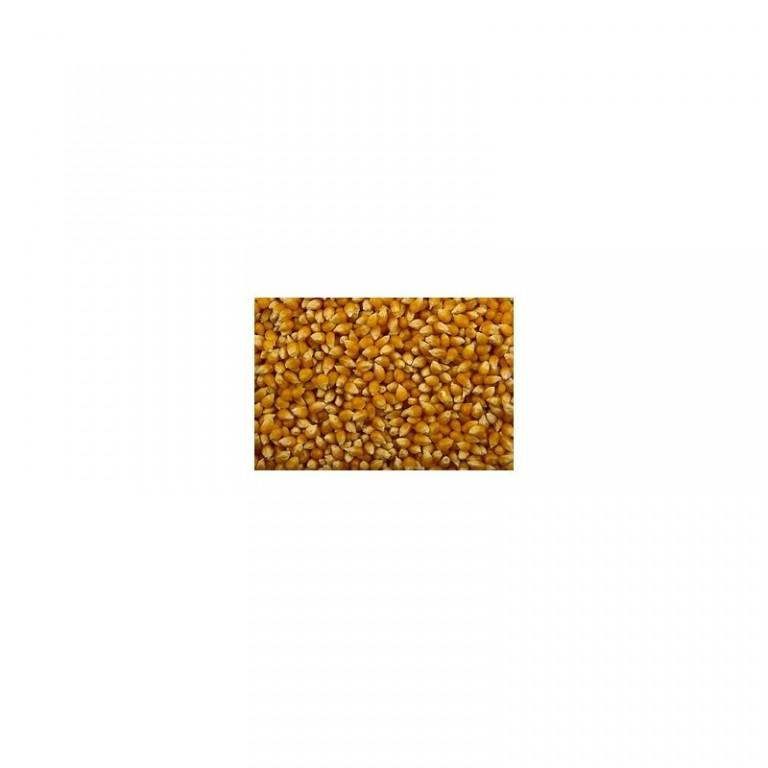 Kukuřice popkornová