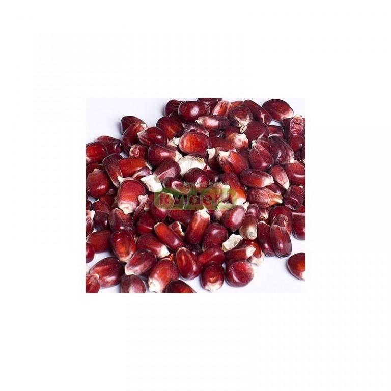 Kukuřice perlová - červená