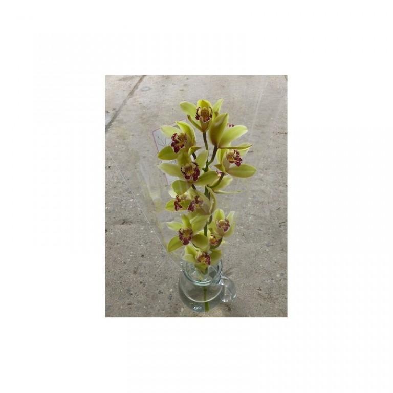 Kytice Orchidej