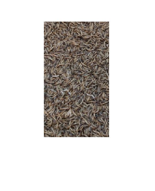 Červy (Potemník Brazilský)-živé